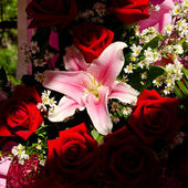 Bouquet of pink lily with red roses in shadow — Stock Photo