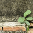 A little tree growing up on old wall — Stock Photo