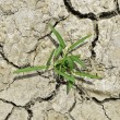 Plant in dried cracked mud — Stock Photo
