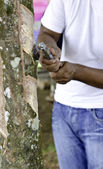 Rubber tapper tapping latex from a rubber tree — Стоковое фото
