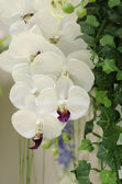 Decoration artificial white orchids — Stock Photo