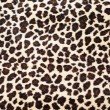 Leopard Skin — Stock Photo #35885363