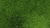 3d green grass background — Stock Photo