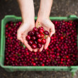 Royalty-Free Stock Photo: Woman holding cherry