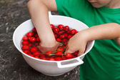 Litte kids eating cherry from bowl — Stock Photo