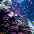 Saltwater Aquarium with Tropical Fish — Stock Photo