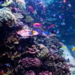 Saltwater Aquarium with Tropical Fish - Stock Photo