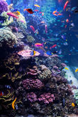 Saltwater Aquarium with Tropical Fish — Stock Photo