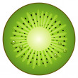 Half circle fruit kiwi — Stock Vector