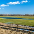 Crop field at early spring - Stock Photo