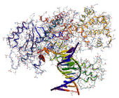 DNA polymerase I. An enzyme that participates in the DNA replica — Stock Photo