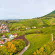 Stock Photo: View of vineyards from Ortenberg castle. Germany