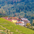 Houses in The Black Forest mountains, near a vineyard. Germany - — Stock Photo #17206835
