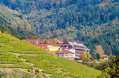 Houses in The Black Forest mountains, near a vineyard. Germany - — Foto de Stock
