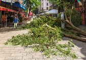 DUSSELDORF, GERMANY - JUNE 10: Uprooted tree in the city center  — Stock Photo