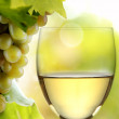Wine collection: White wine glass and grapes in vineyard — Stock Photo