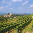 Landscape in Piedmont near Asti,Italy — Stock Photo
