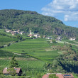 Tramin,South Tyrol,Italy — Stock Photo