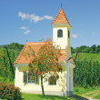 Stock Photo: Vineyard Landscape,Styria,Austria