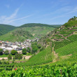 Mayschoss,Ahr Valley,Rhineland-Palatinate,Germany — Stock Photo