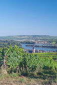 Ruedesheim,Rhine River,Germany — Stock Photo
