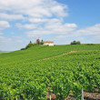 Stock Photo: Champagne region,Verzenay,France