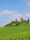 Champagne Region near Verzenay,France — Stock Photo