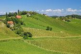 Styrian Tuscany,Styria,Austria — Stock Photo