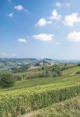 Vineyard Landscape in Piedmond,Italy — Stockfoto