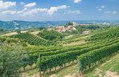Vineyard Landscape,Piedmont,Italy — Stock Photo