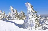 Wintertime on Brocken Mountain — Stock Photo