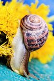 Brown snail crawling on vivd green grass, macro shot — Stock Photo
