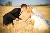 поцелуй молодоженов в высокой траве — Стоковое фото