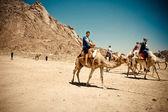 Boy on a funny camel. — Stock Photo