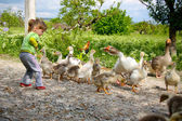 The little girl is afraid of geese — Stock Photo