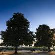 Foto Stock: Two trees with benches and couples underneath