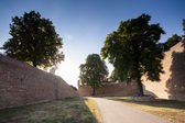 Large trees in Kalemegdan fortress in Belgrade, Serbia — Stock Photo