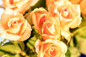 Five orange roses with morning dew — Stock Photo