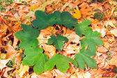 Green leaves in a circle on the fallen leaves — Stock Photo