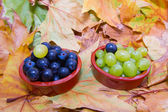 Grapes in pots with one intruder — Stock Photo