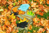秋季服装 — 图库照片