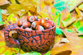 Hazelnuts in ceramic pot — Stock Photo