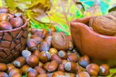 Hazelnuts anu nuts spilled from ceramic pot — Stock Photo