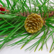 Stock Photo: Evergreens