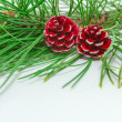 Evergreens — Stock Photo