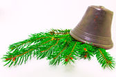 Christmas evergreens — Stock Photo