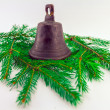 Christmas evergreens — Stockfoto #15886343