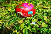 маленький голубой цветок с яйцом — Стоковое фото