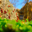 Red beetles on spring sun — Stock Photo #22446251