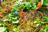 Mały niebieski kwiat — Zdjęcie stockowe